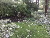 Storm Damage on Pot Spring Road