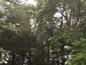Rain in Manchester