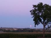 Pink moon rising.
