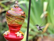 Hummingbirds Pictures I Made To Day