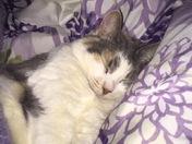 Sassy Sleeping