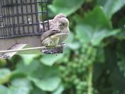 Bird Backyard Humor
