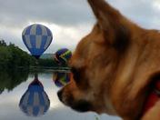 Tripper the hot air balloon loving dog