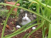 My Cat Kush playing outdoors...
