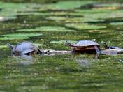 A Herd of Turtles