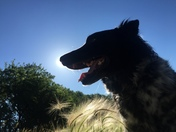 Jax in the sun