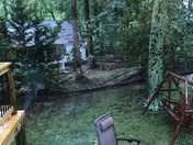 My backyard