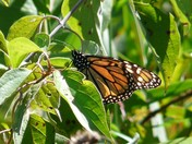 N.P. Dodge Park Butterflies
