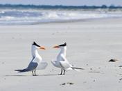 Cumberland Island National Seashore, GA
