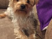 Happy Furgus pup!