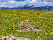 Flat Top Wilderness Area