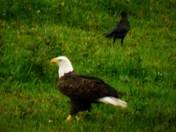 Eagle Landed