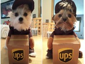 Lexi & Roxie to go to work for UPS