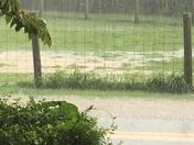 Frogtown rain