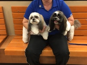 Back to school for Sophie and Sadie Savage  at Petsmart in Midwest City!