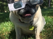 Puddin' is ready for the eclipse!