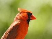 Sunday bird day