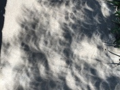 Eclipse pic