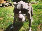 My Granddog