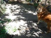 Our dog was surprised by total eclipse but not our cat