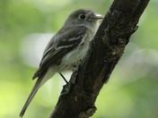 Little Bird #1