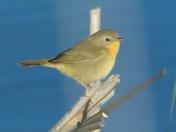 Little Bird # 2