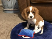 Sharing picture of puppy