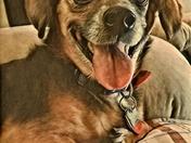 Abby 2017 National Dog Day Photo