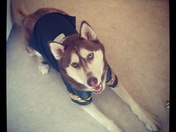 Rambo representing the Green Bay Packers on National Dog day!