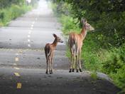 2d. Deer on bicycle trail