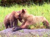 Come On Mom, I'm Hungry !