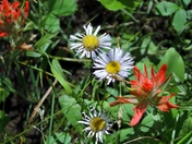 Wild Flowers of the Rocky Mountains,