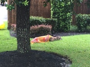Hurricane - Tired Deer