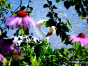 Swan in Flowers