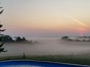 Fog below the trees