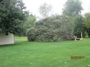 Trees Down on Hambiltonian Way, York, (Manchester Township)