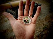 Jenny's Coin