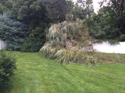 Tree hit by lighting in Tewksbury