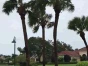 Irma in Palm. It's, FL 10:45AM