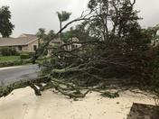 Tree Down in Driveway