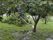 Port Saint Lucie Hurricane Irma