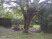 Gates down and trees on jog and Lantana