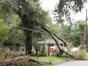 Half of tree on power lines