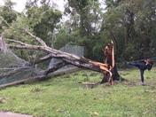Hurricane Irma Damage at the University of Florida