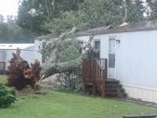Tree split house