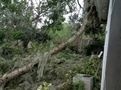 Tree Down and more
