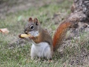 "A squirrel who thinks he's a ""chip-monk"""