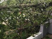 What Hurricane Irma left behind!