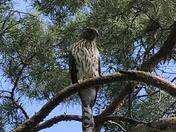A bird in the park