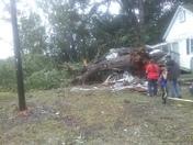Irma tree damage